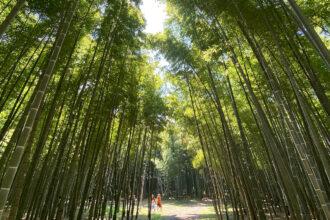 在和歌山农场的竹林中休闲