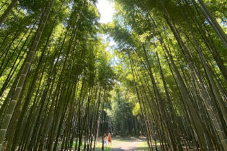 Relax in the Bamboo Forest at Wakayama Farm
